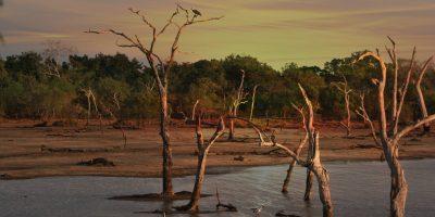 beach-dawn-desert-709563