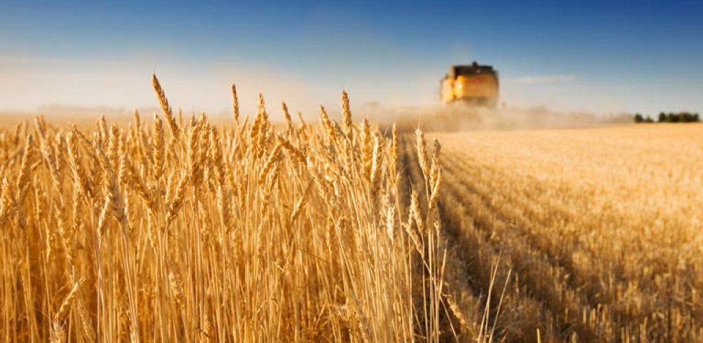 truck-wheat